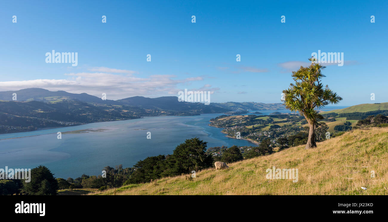 Küstenlandschaft, Otago Harbour, Otago, Südinsel, Neuseeland Stockbild