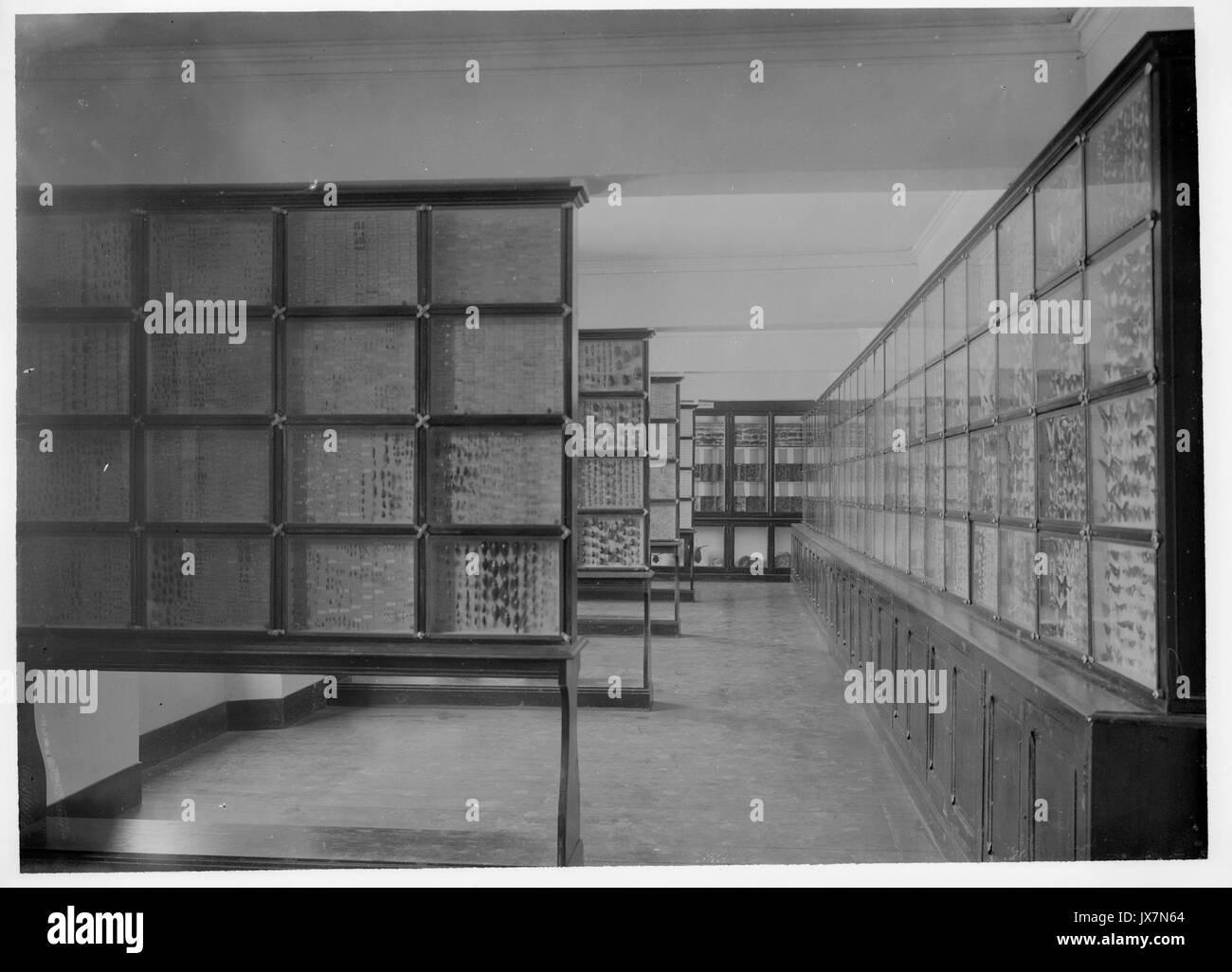Museum Salle Marquet Entomologie MHNT PHa 138 B 05 06 Stockbild