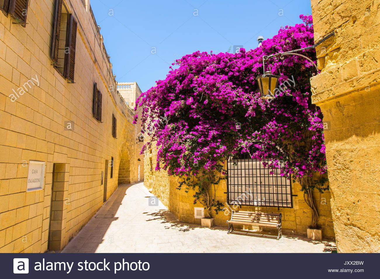 Bank unter einem lila blühenden Bougainvillea in einer schmalen Gasse von Mdina, Malta Stockbild