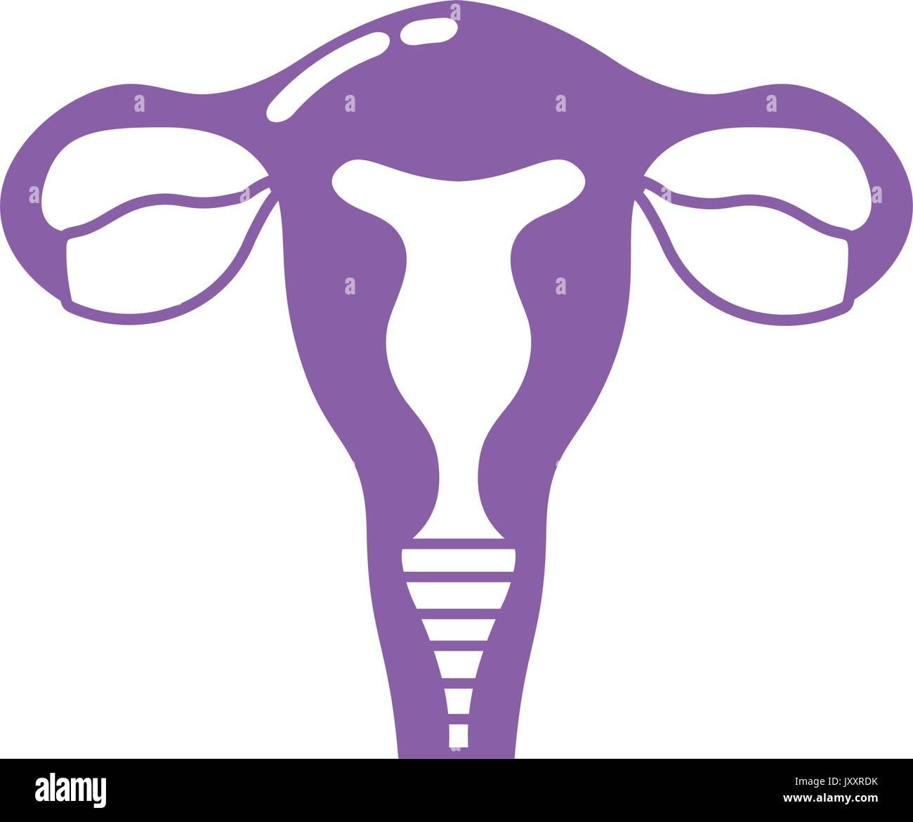 Silhouette Eileiter mit Gebärmutter für die menschliche Anatomie ...