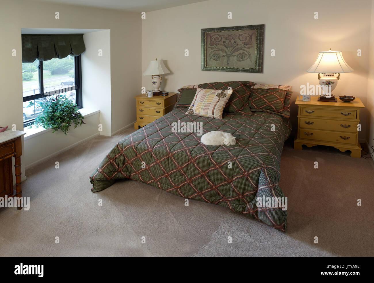 Wohn Schlafzimmer Mit Katze Auf Bett Stockfoto Bild 154879466 Alamy