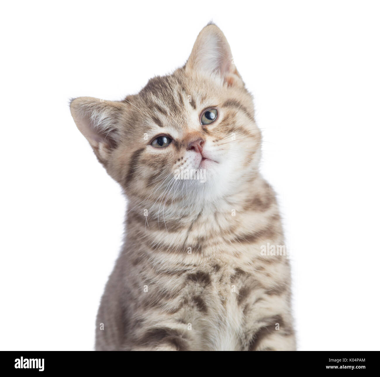 Lustige Katze Video