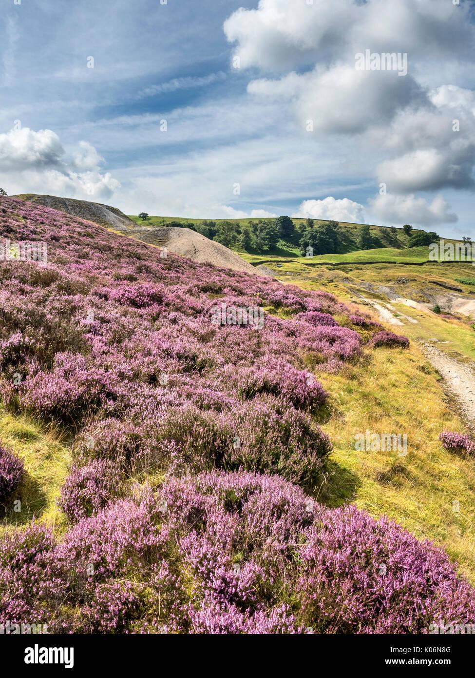 Heather in voller Blüte und Alten Halden bei Wohlhabenden Mine in der Nähe von greenhow Pateley Bridge Nidderdale AONB Yorkshire England Stockbild