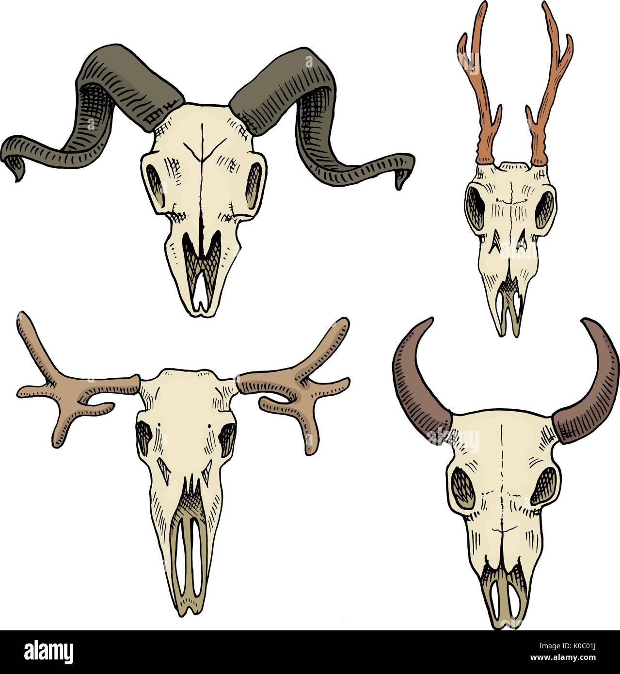 Biologie oder Anatomie-Illustration. gravierte handgezeichnete im ...