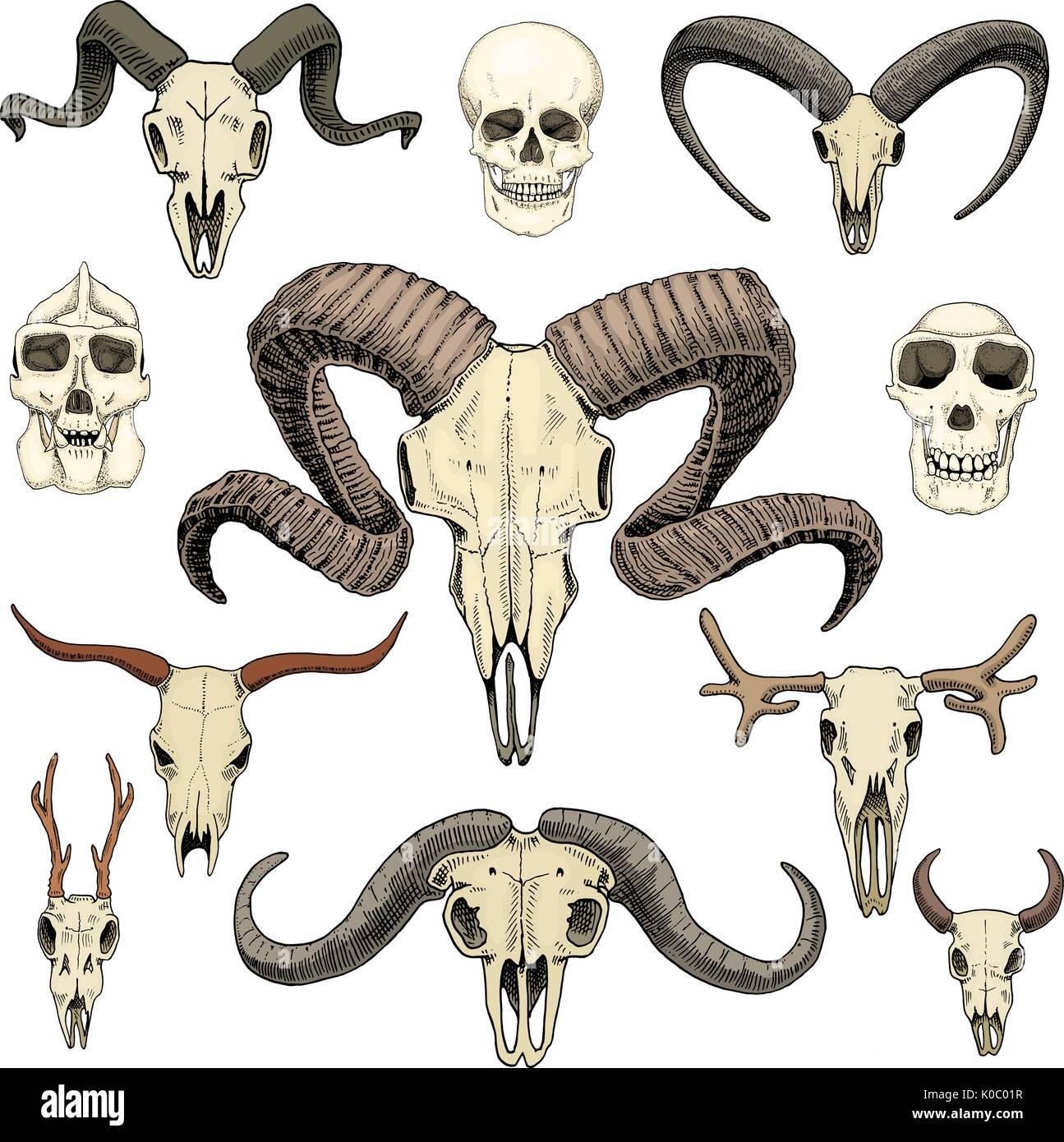 Anatomie-Illustration. gravierte handgezeichnete im alten Skizze und ...