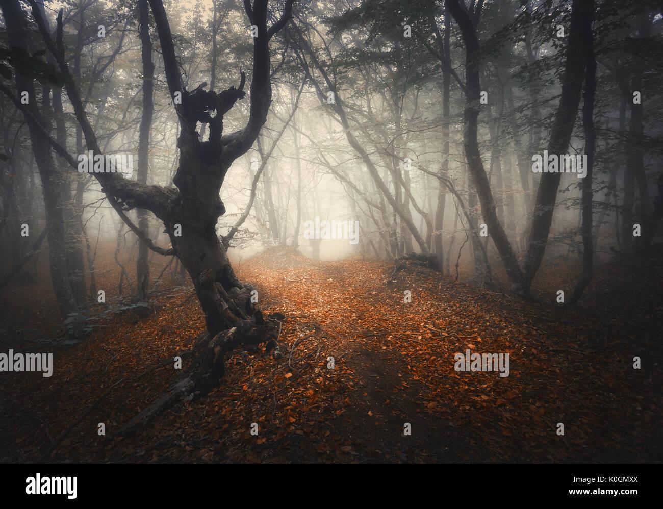Dunkle Nebel Wald. Mystische Herbst Wald mit Trail in ...