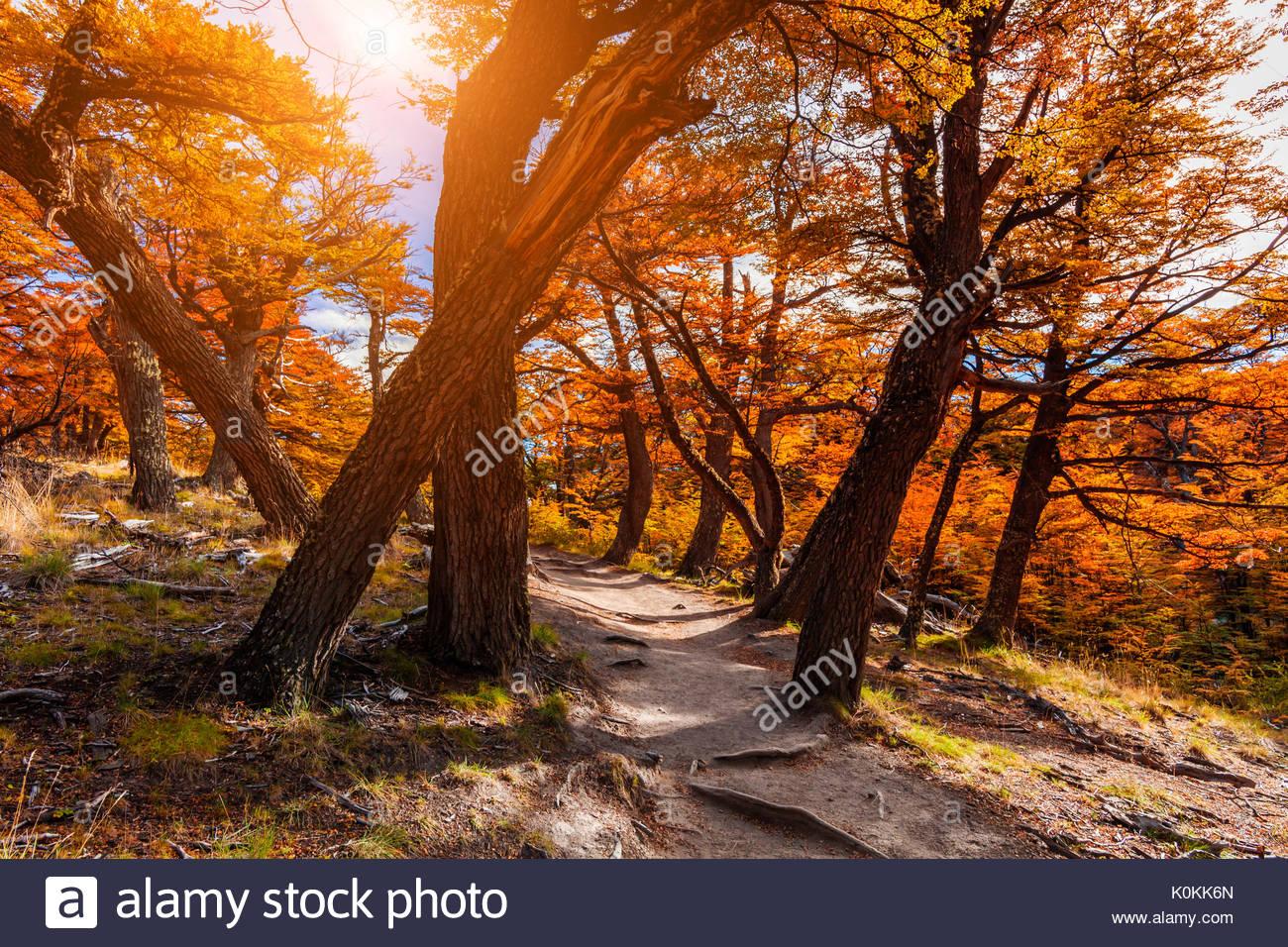 Pfad in den Wald. Patagonien, Argentinien Stockbild