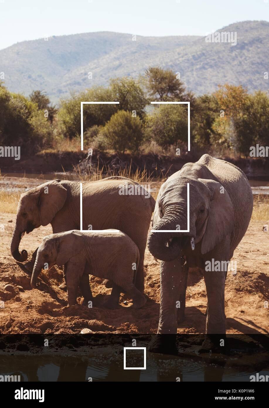 Digital composite von Camera Phone Application Interface Stockbild