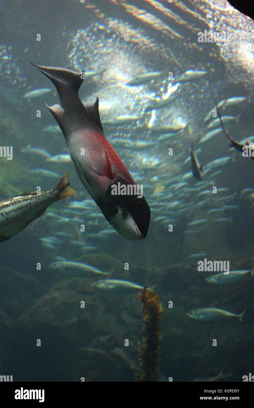 Unterwasser Bild von Fischen Stockbild