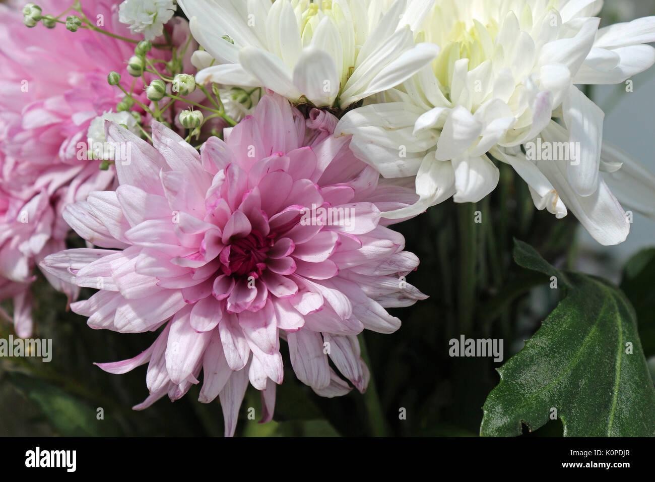Ein Blumenarrangement aus rosa und weißen Blüten Stockfoto