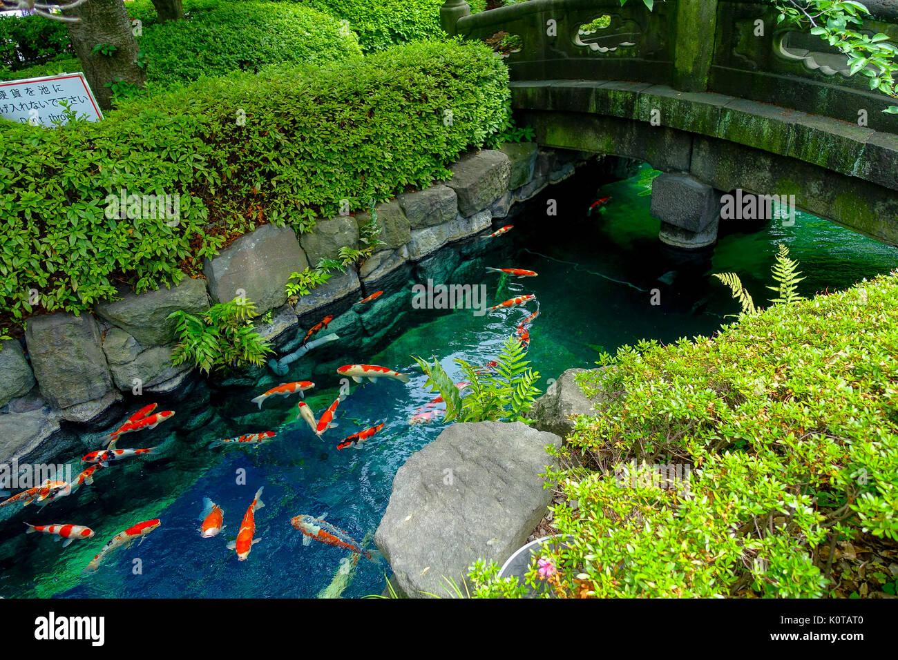 schone garten mit teich, schöne koi-fische schwimmen in pong in einem kleinen fluss, teich, Design ideen