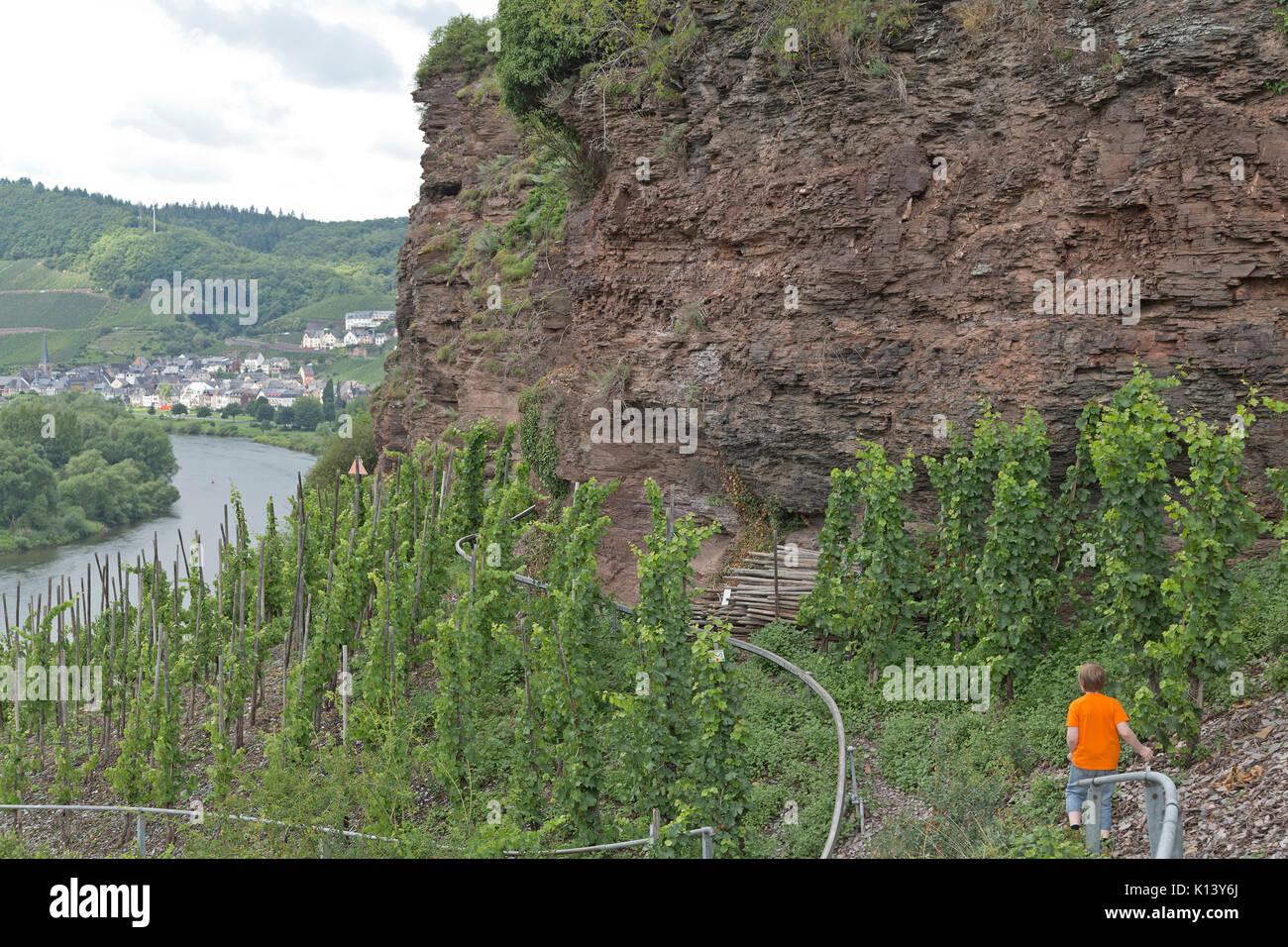 Klettersteig Mosel : Junge auf klettersteig uerzig mosel rheinland pfalz