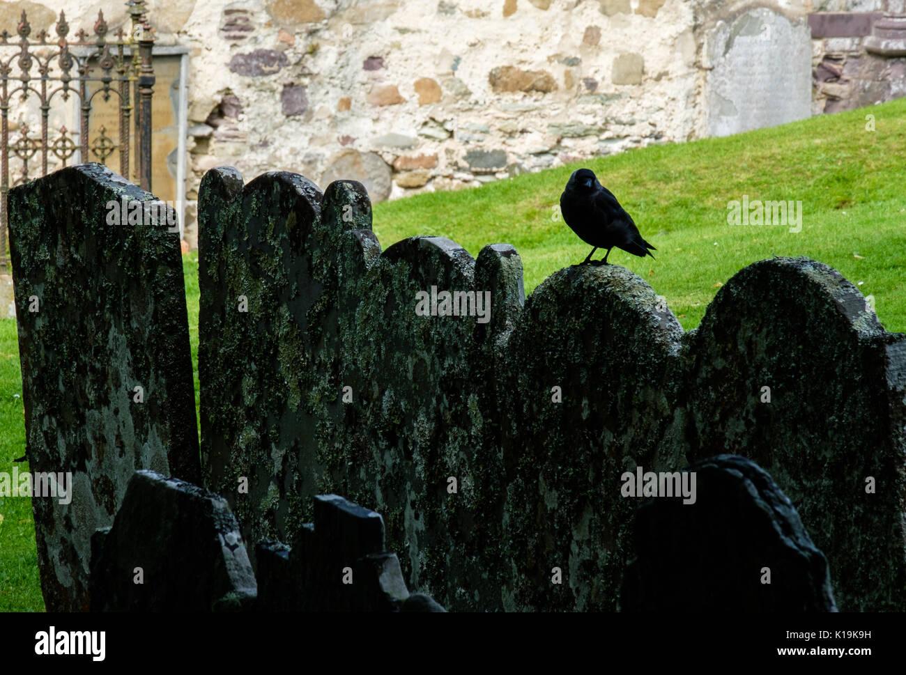 Dohle auf einem Grabstein in der St. David's Cathedral, St. David's Pembrokeshire, Wales, Großbritannien Stockbild