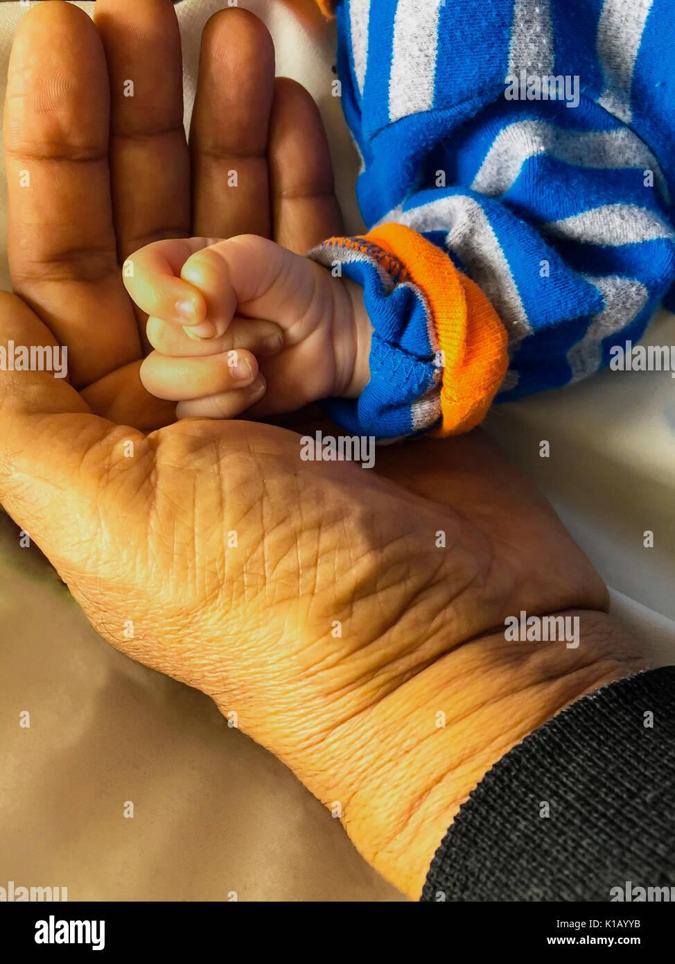 Ein Großvater wiegen die Hand eines neugeborenen Babys, eine Verbindung zwischen den Generationen, Nova Scotia, Kanada Stockbild
