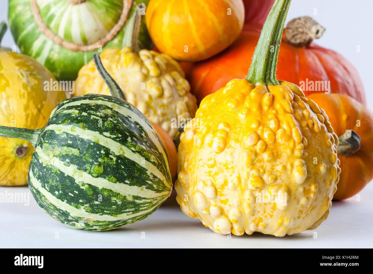Bunte Kürbisse Halloween Kürbisse Kürbis Sorten Makro Stockfoto