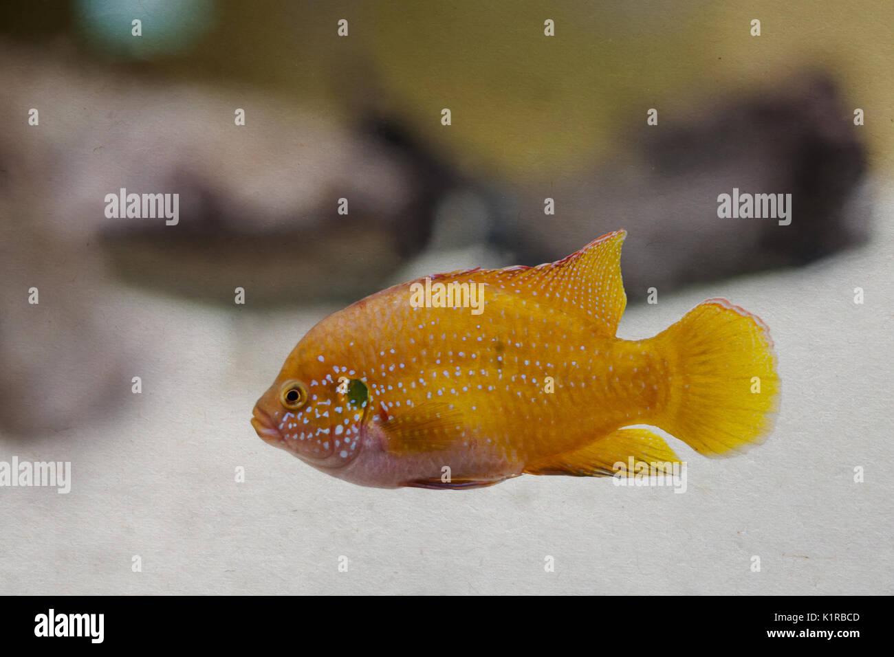 Ausgezeichnet Fische Färben Druckbare Seiten Fotos ...