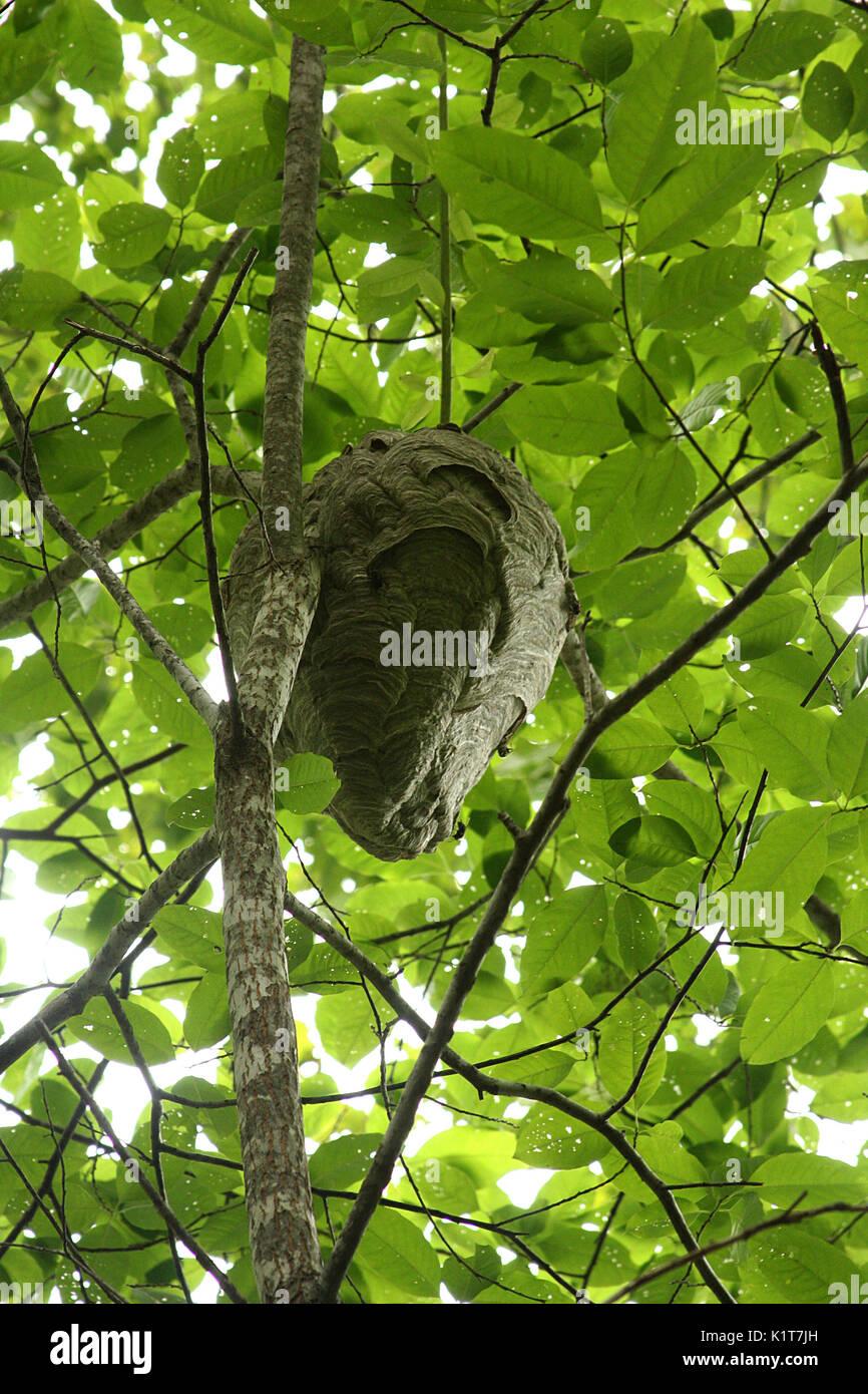 hanging at nest stockfotos hanging at nest bilder alamy. Black Bedroom Furniture Sets. Home Design Ideas