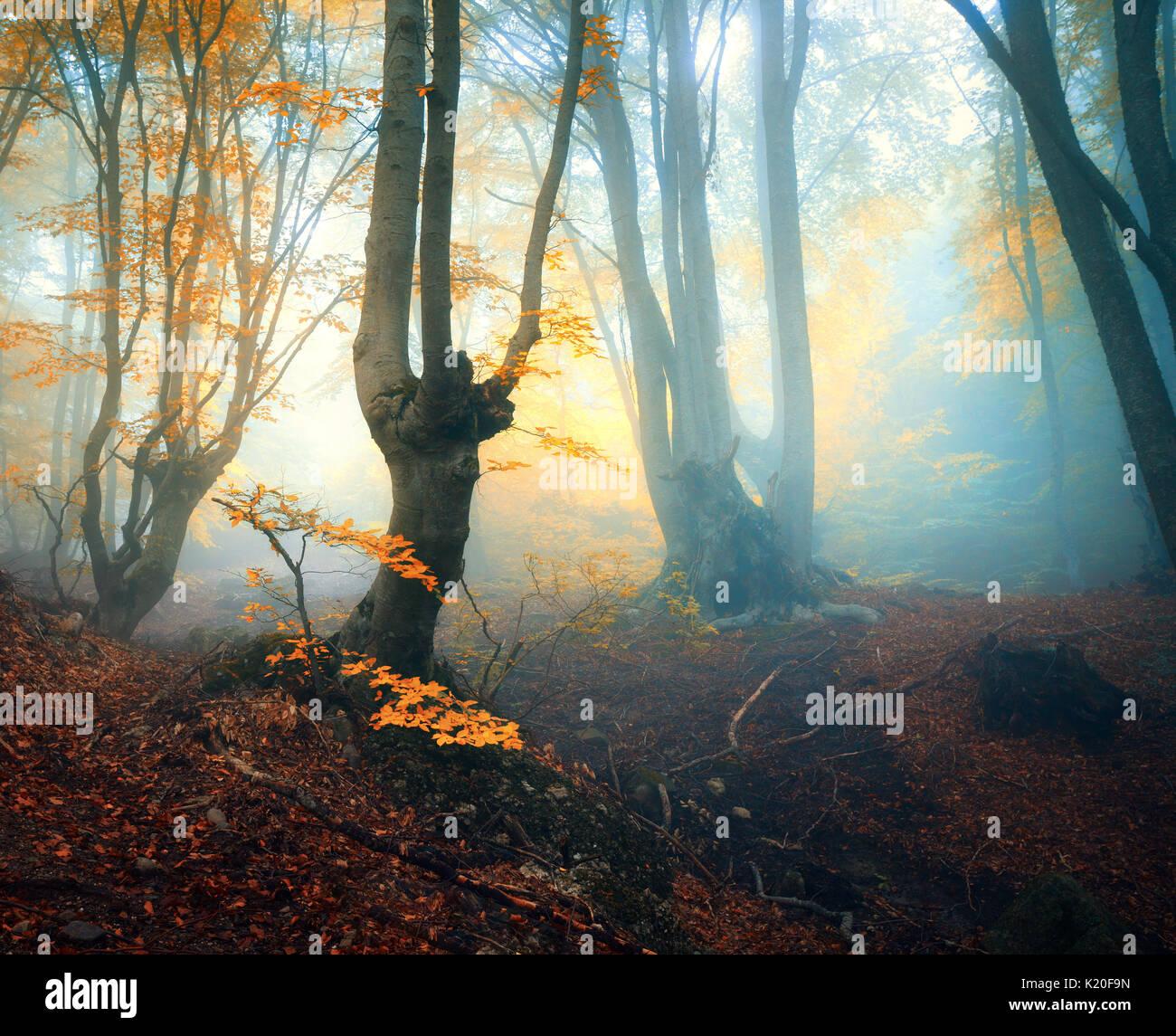 Märchen Wald im Nebel. Herbst Wald. Die verzauberte Herbst ...