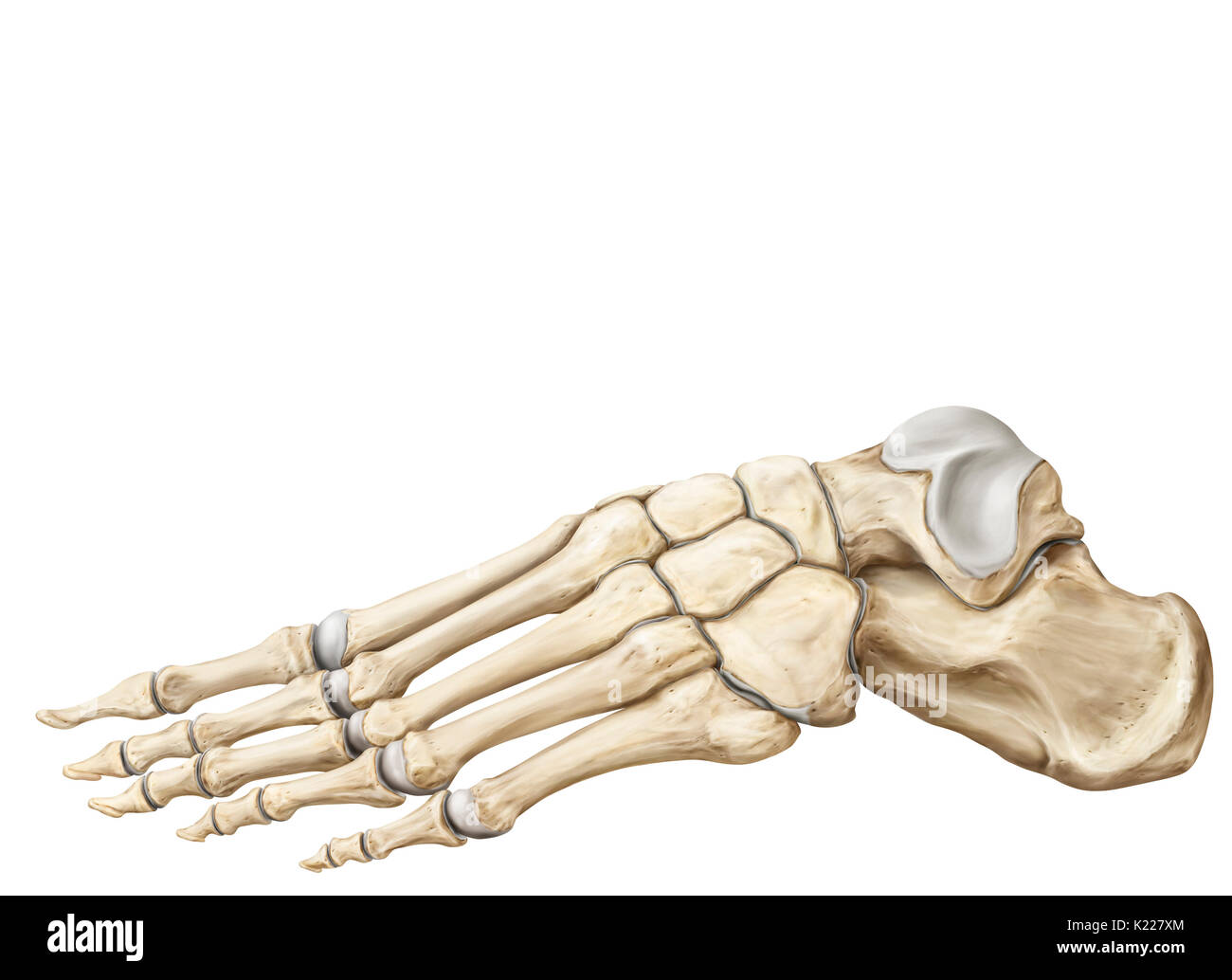 Bones Lower Body Stockfotos & Bones Lower Body Bilder - Alamy