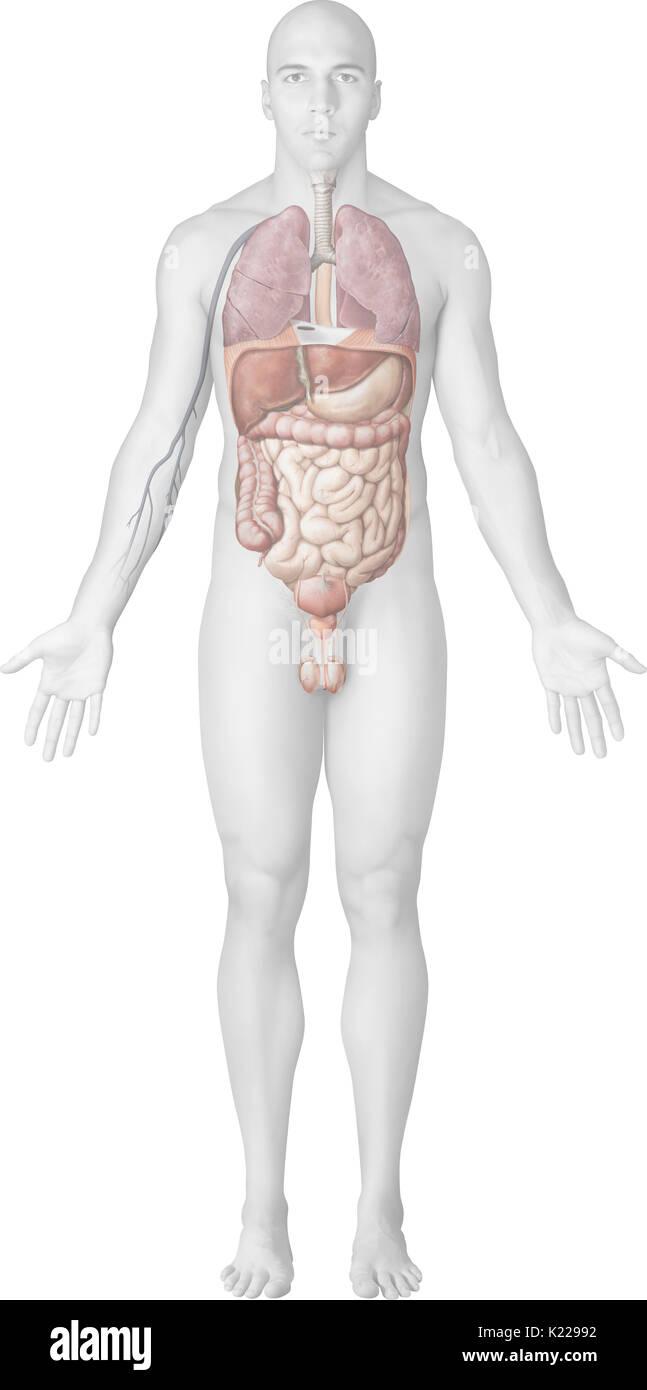 Urogenital Stockfotos & Urogenital Bilder - Alamy