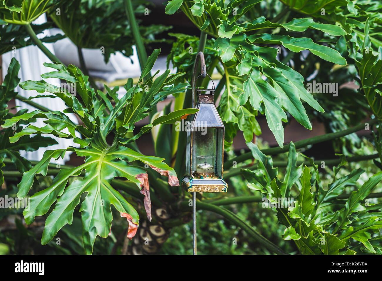 Vintage Glas Petroleumlampe im Garten Dekoration. Tropische ...