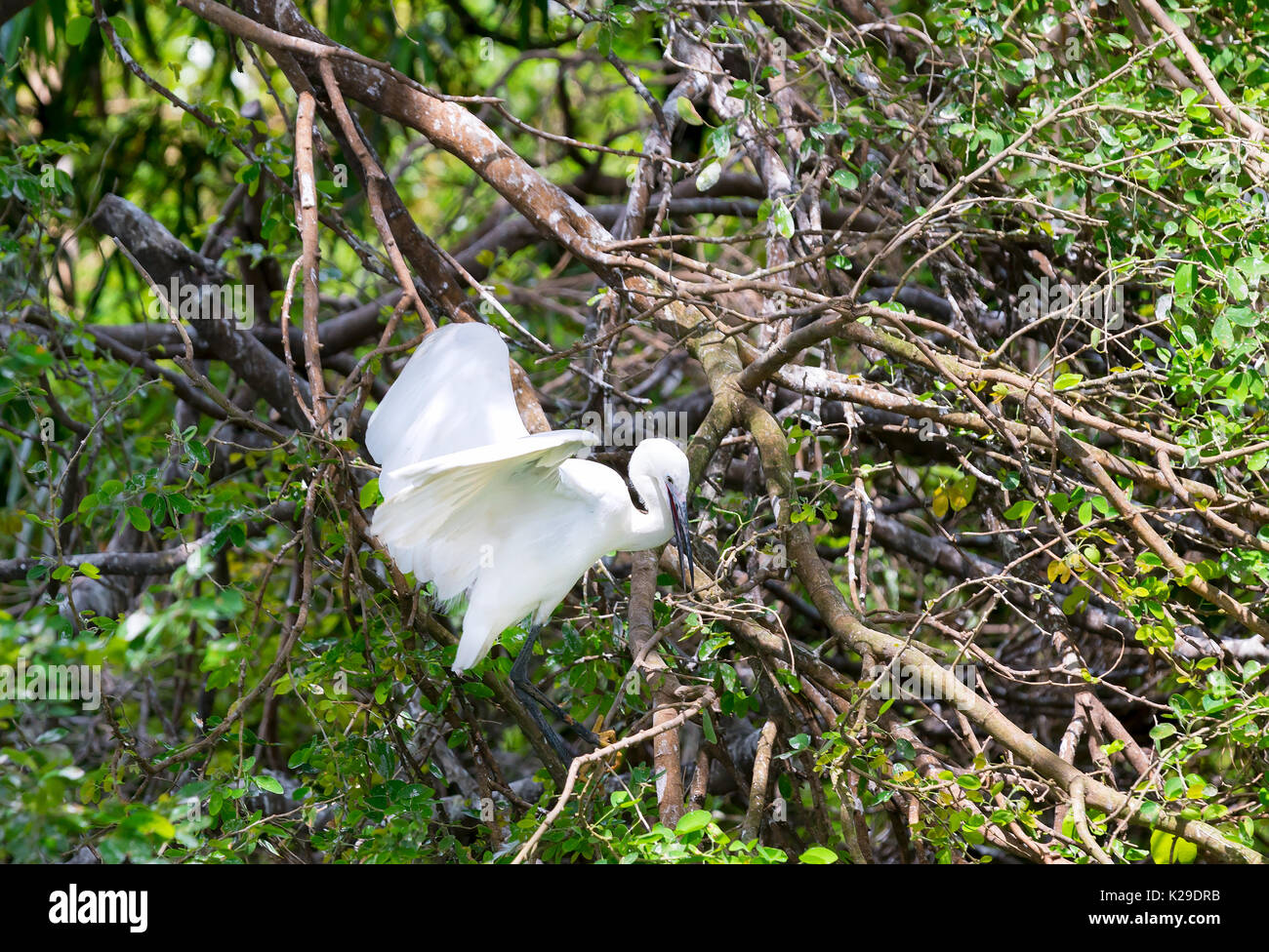 heron baby in nest stockfotos heron baby in nest bilder alamy. Black Bedroom Furniture Sets. Home Design Ideas