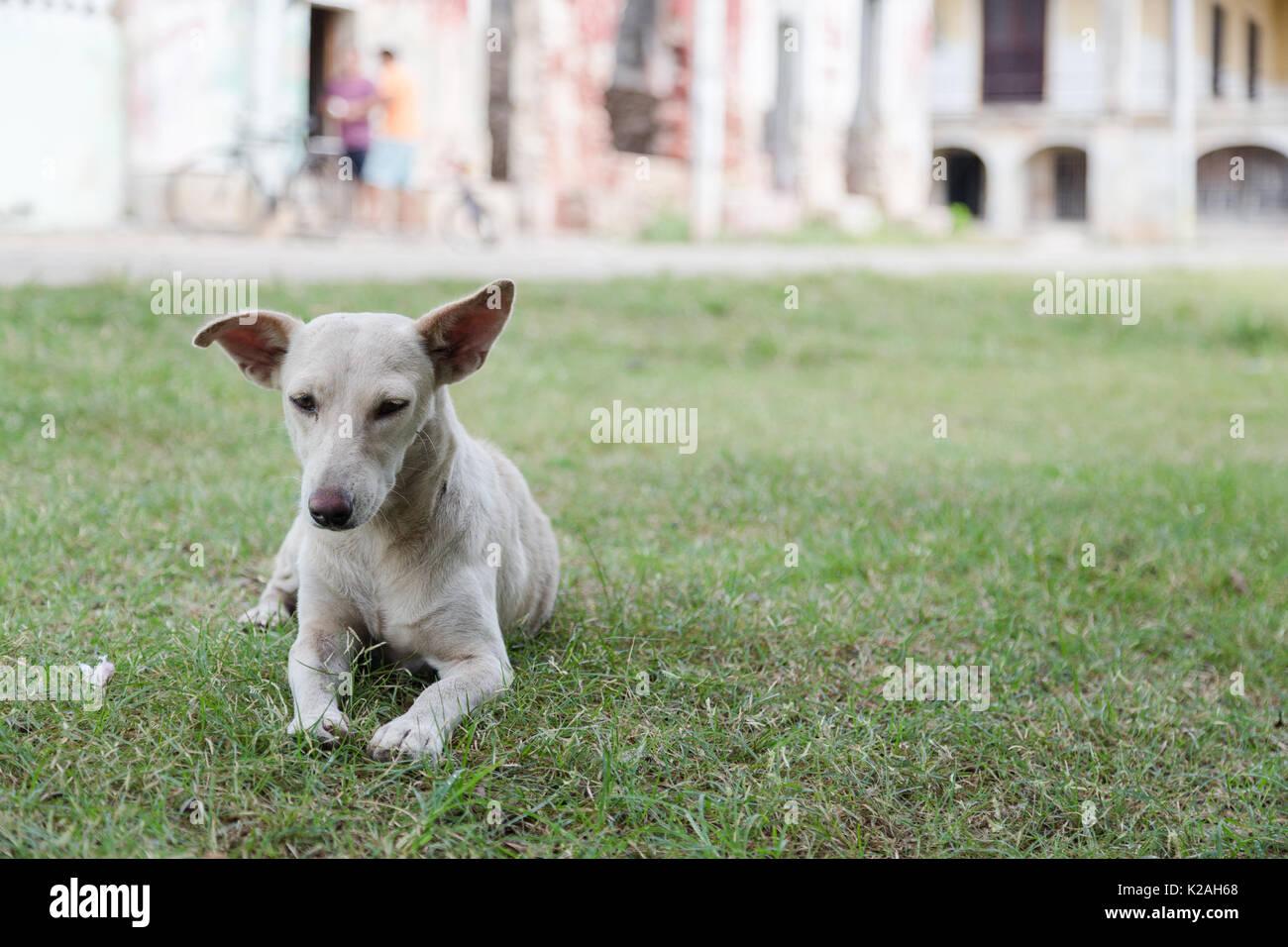 Ein lokaler Hund verbringt den Nachmittag auf dem Boden der Hacienda Yaxcopoil Yxcopoil,, Yucatan, Mexiko. Stockbild
