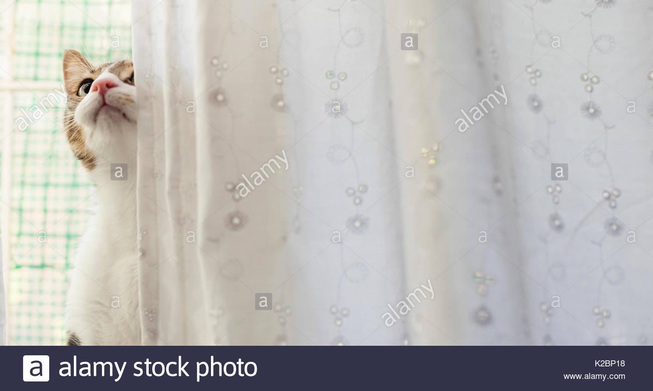 Die Katze schaut hinter einem Duschvorhang Stockbild