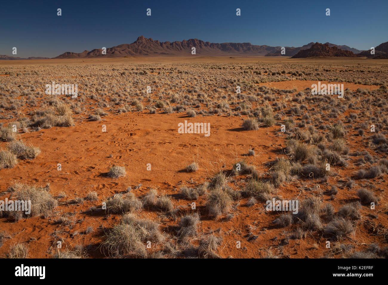 Fairy Kreis in der Wüste Namib, Namibia. Es hat vor kurzem festgestellt, dass diese Muster durch eine Mischung von Termiten verursacht werden, in Kombination mit der Aktion der Gräser im Wettbewerb um Wasser. Stockbild