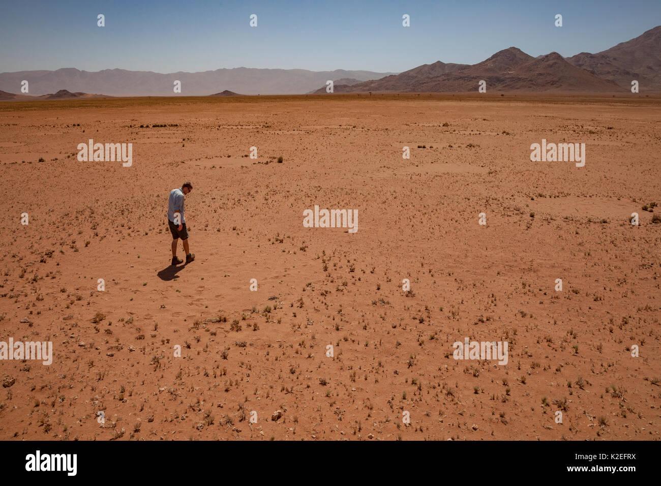 Forscher steht in einem Märchen Kreis in der Wüste Namib, Namibia. Diese Muster haben vor kurzem festgestellt, dass diese Muster durch eine Mischung von Termiten verursacht werden, mit der Aktion der Gräser abschließen für Wasser kombiniert. Februar 2015 Stockbild