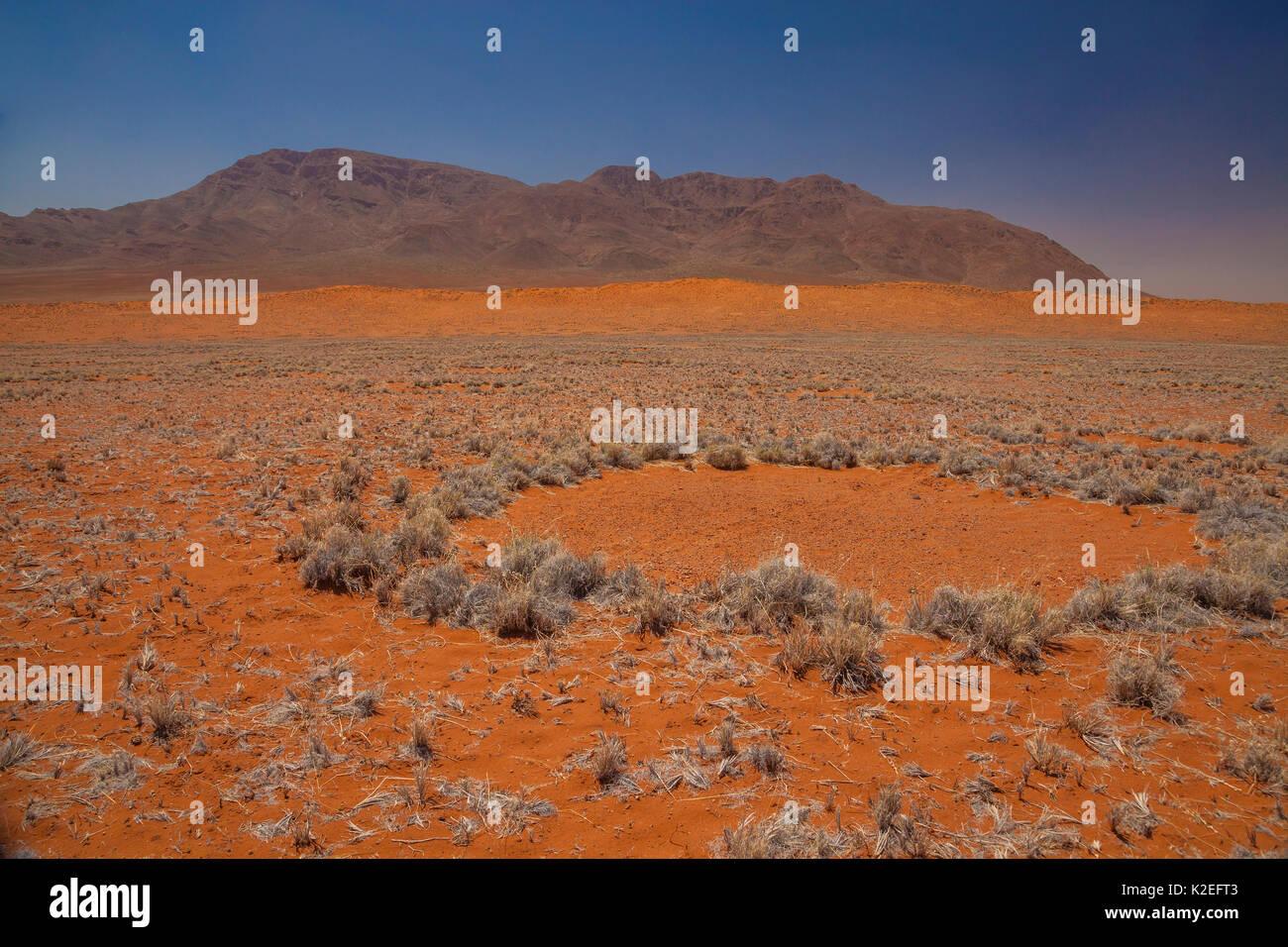 Fairy Kreis in der Wüste Namib, Namibia. Diese Muster haben vor kurzem festgestellt, dass diese Muster durch eine Mischung von Termiten verursacht werden, mit der Aktion der Gräser abschließen für Wasser kombiniert. Februar 2015 Stockbild