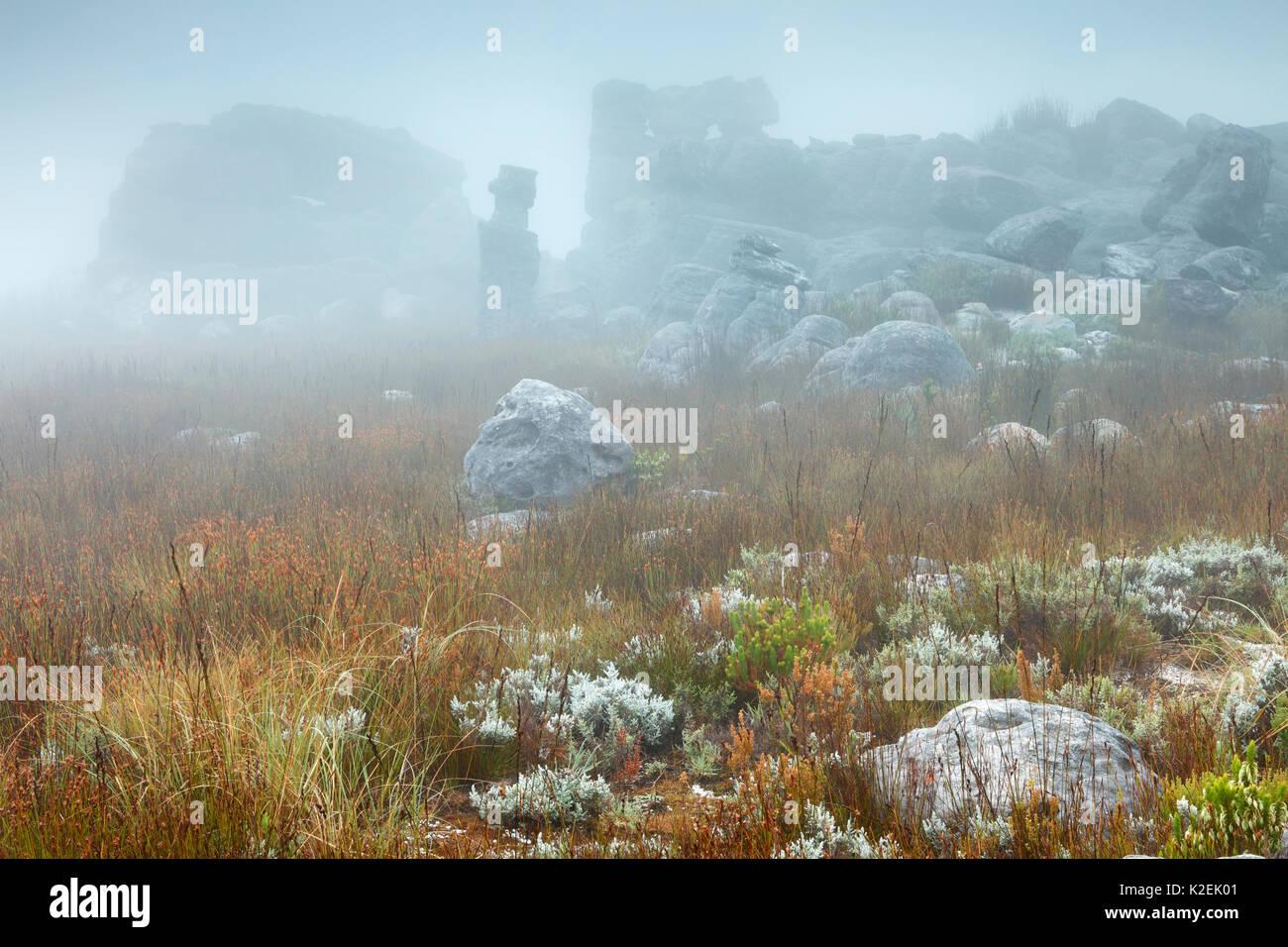 Felsen und Vegetation im Nebel im Morgengrauen, Hottentots Holland Berge, Western Cape, Südafrika, Dezember 2014. Stockfoto