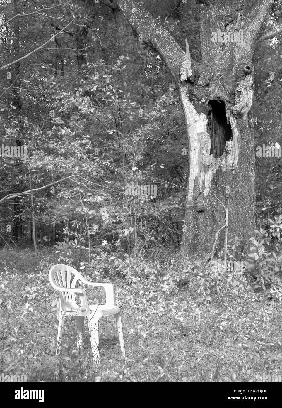 Weißer Stuhl in einem bewaldeten Gebiet. Stockfoto