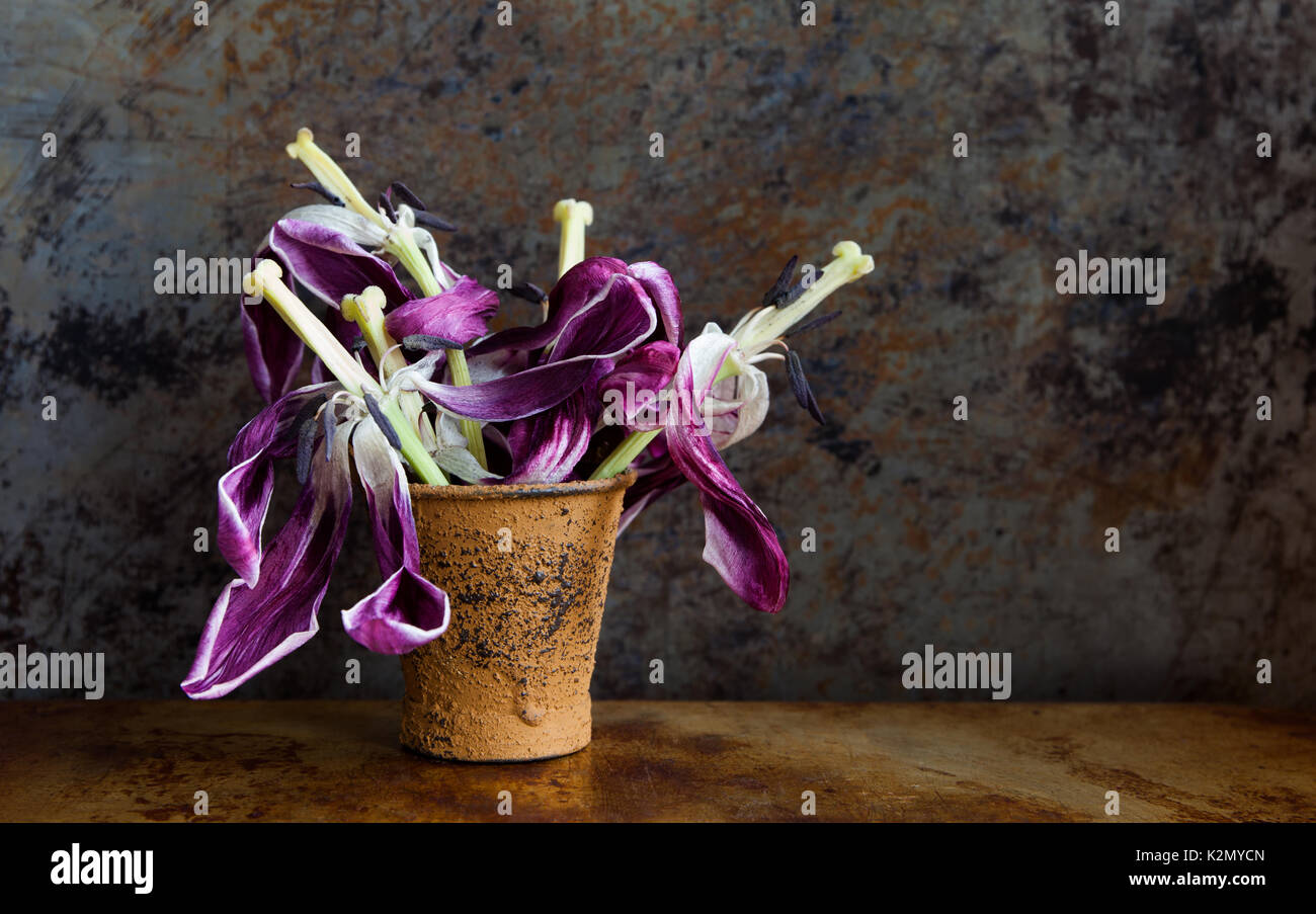 dried tulips stockfotos dried tulips bilder alamy. Black Bedroom Furniture Sets. Home Design Ideas