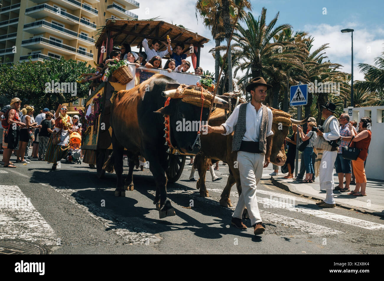 Puerto de la Cruz, Teneriffa, Kanarische Inseln, Spanien - 30. Mai 2017: Eingerichtet Stier gezogenen Wagen und Canarias Menschen in traditionellen Kleidung teilnehmen Ich Stockbild