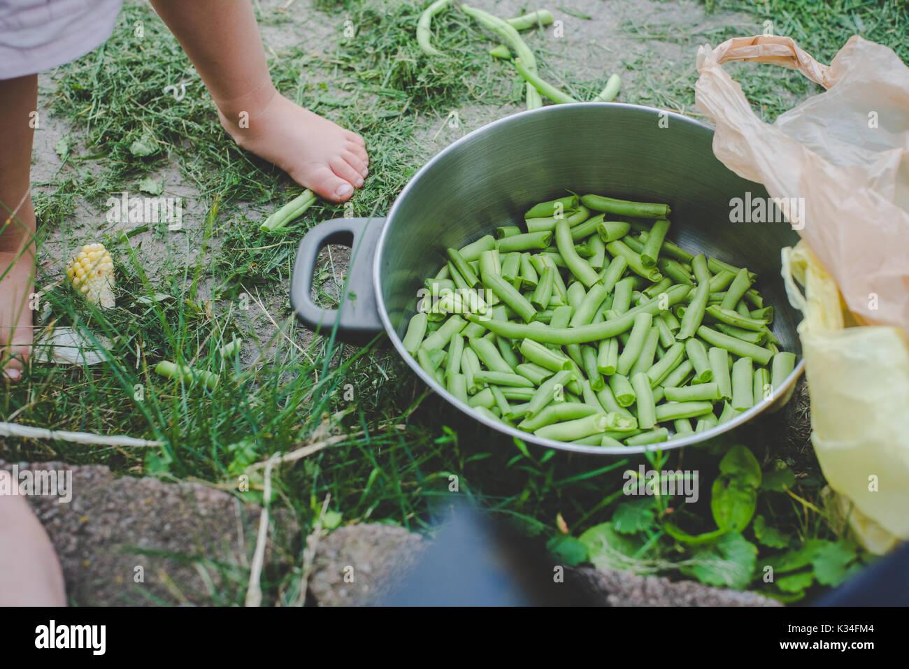 Riß frische grüne Bohnen in einer silbernen Topf. Stockbild