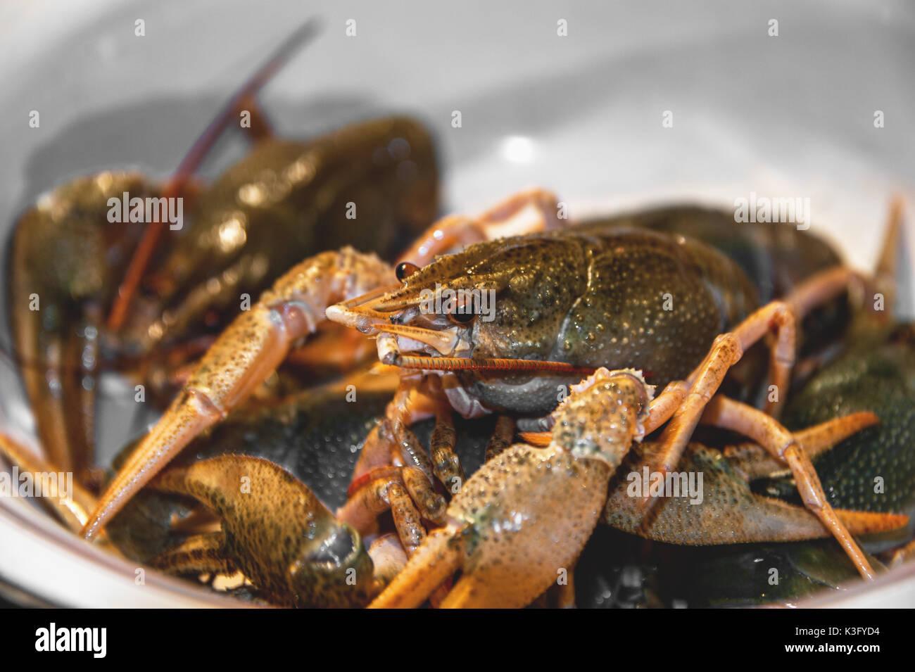 Live green Flusskrebse auf einem großen Teller vor dem Kochen. Close-up. Stockbild