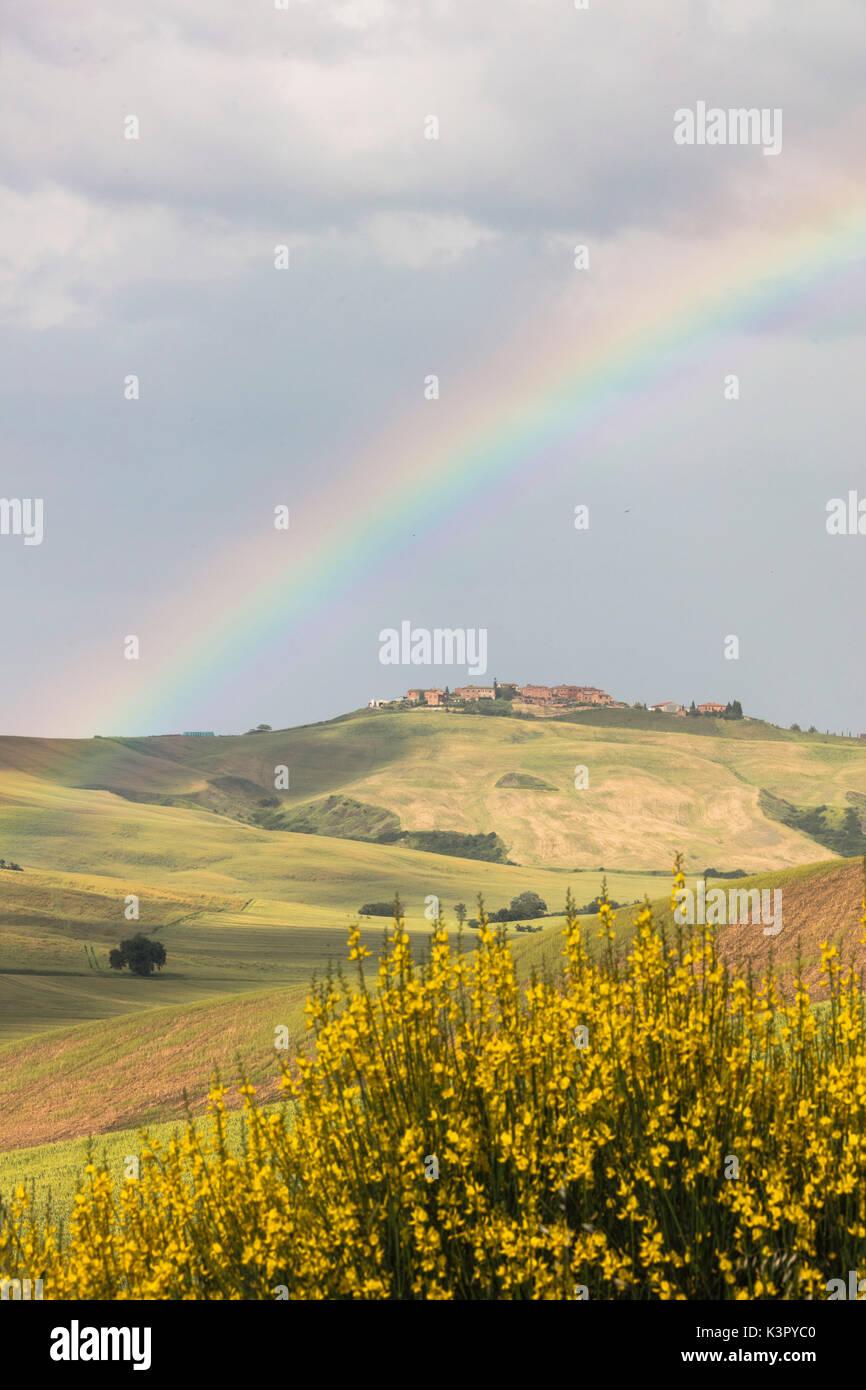 Gelbe Blumen und Regenbogen Rahmen die grünen Hügel der Crete Senesi ...