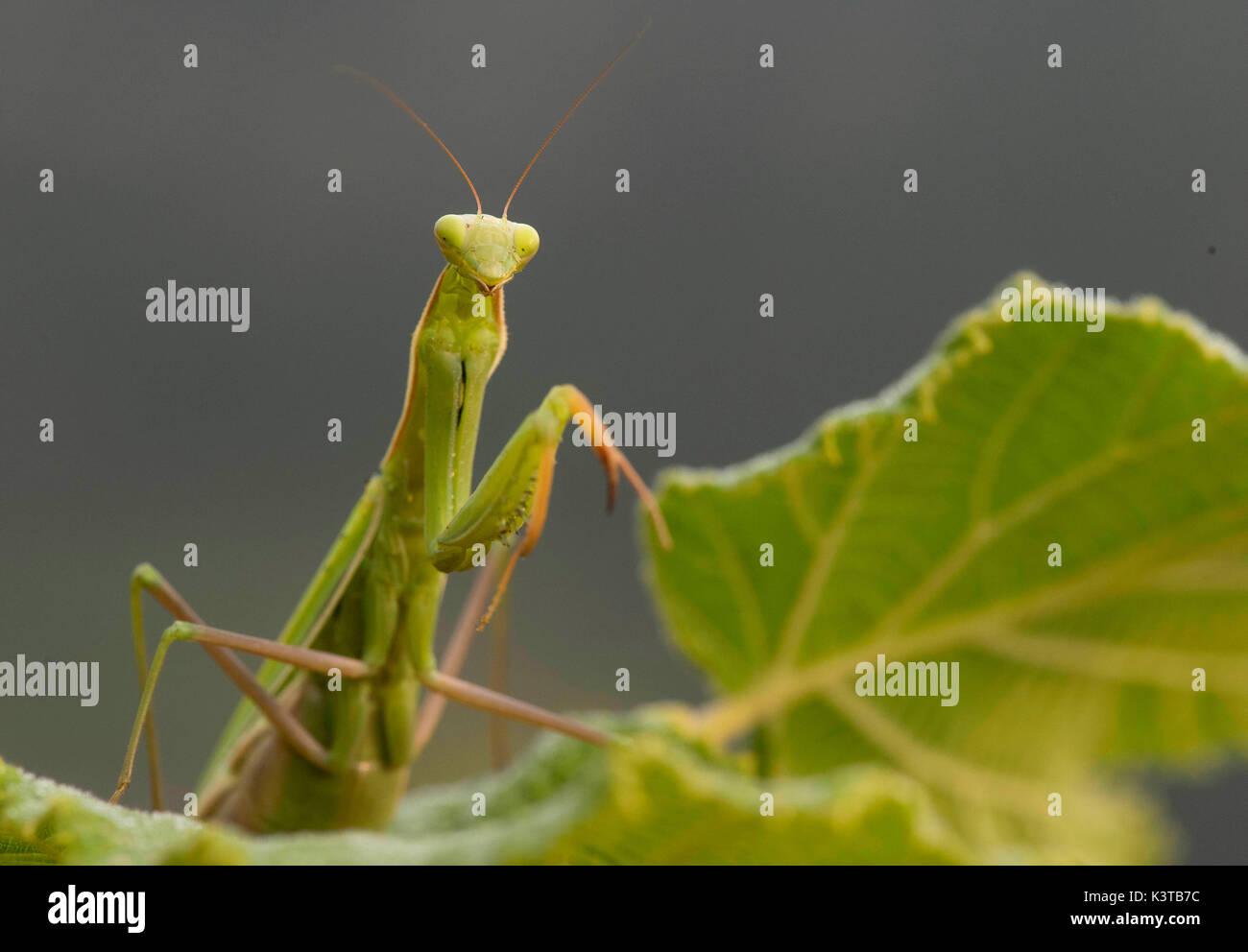 Charmant Draht Insekten Bilder - Elektrische Schaltplan-Ideen ...