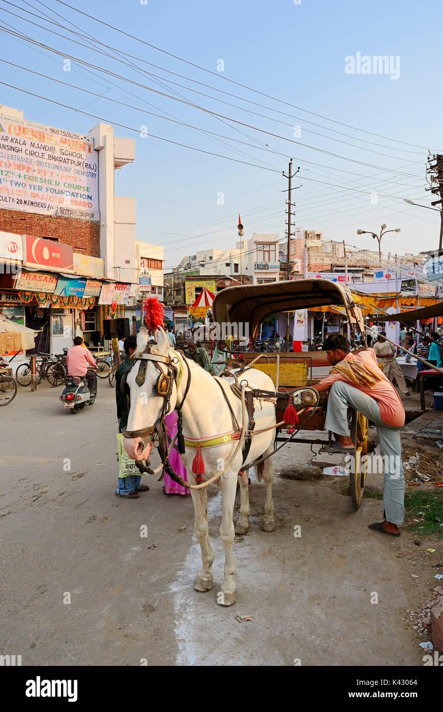 Horse Trainer, Bharatpur, Rajasthan, Indien | Pferdekutsche, Bharatpur, Rajasthan, Indien Stockbild