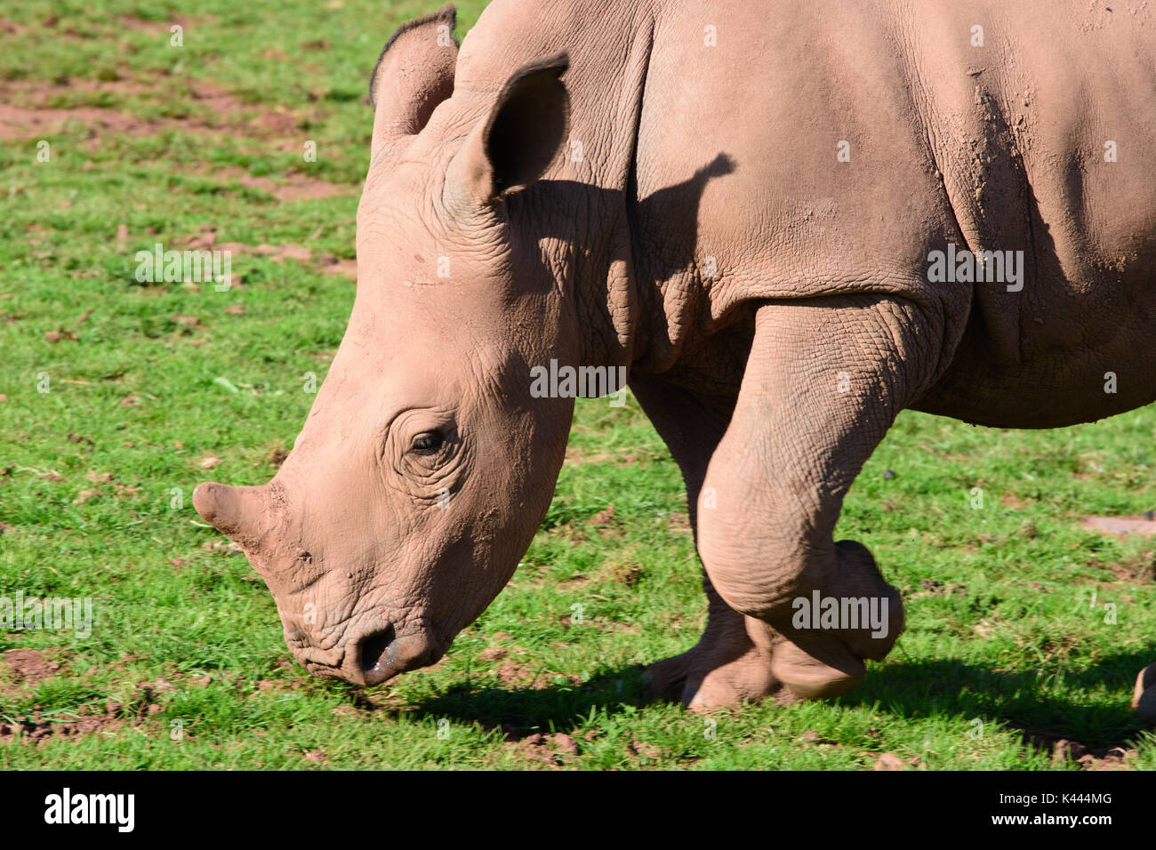 Zoo-Tiere Stockbild