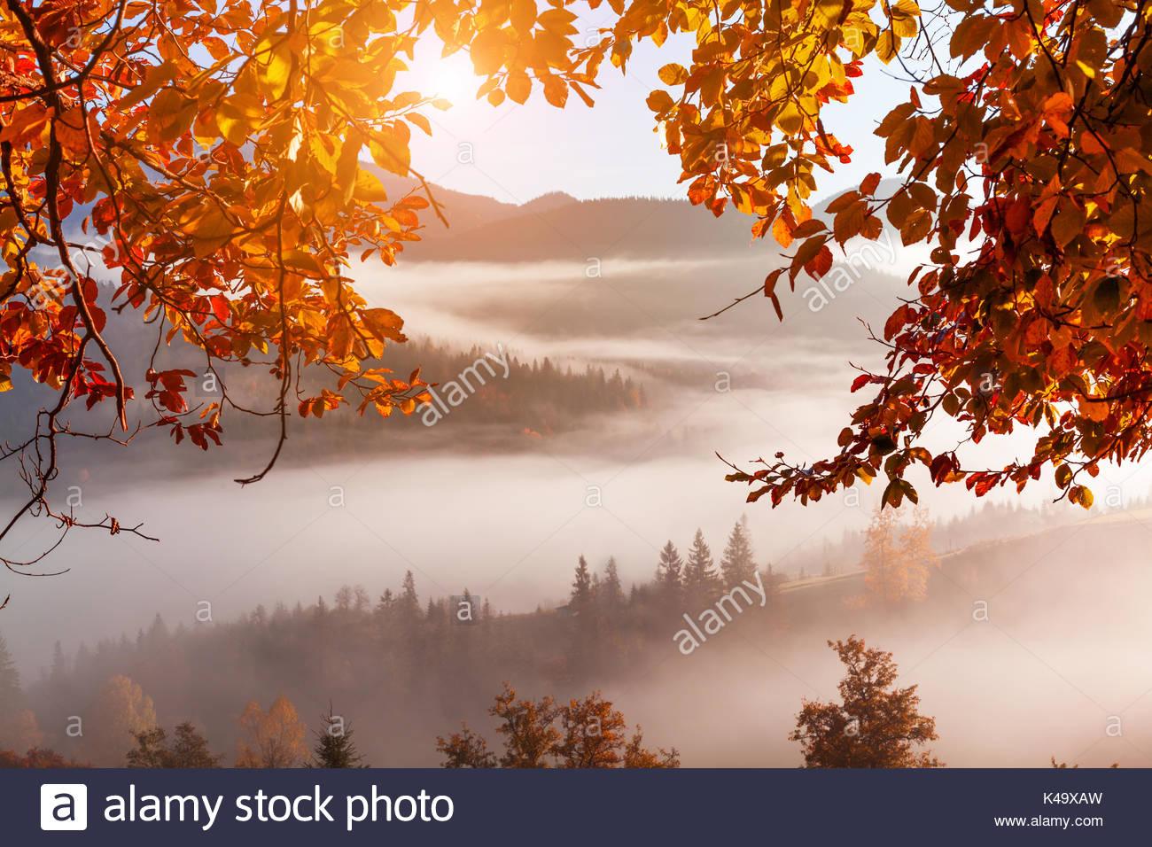 Foggy Dawn im Herbst in den Bergen Stockbild