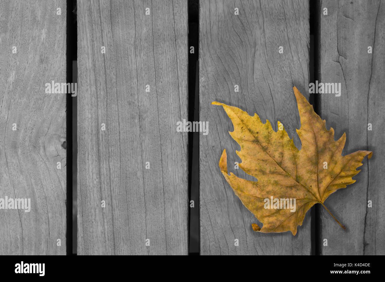Leaf Vector Stockfotos & Leaf Vector Bilder - Alamy