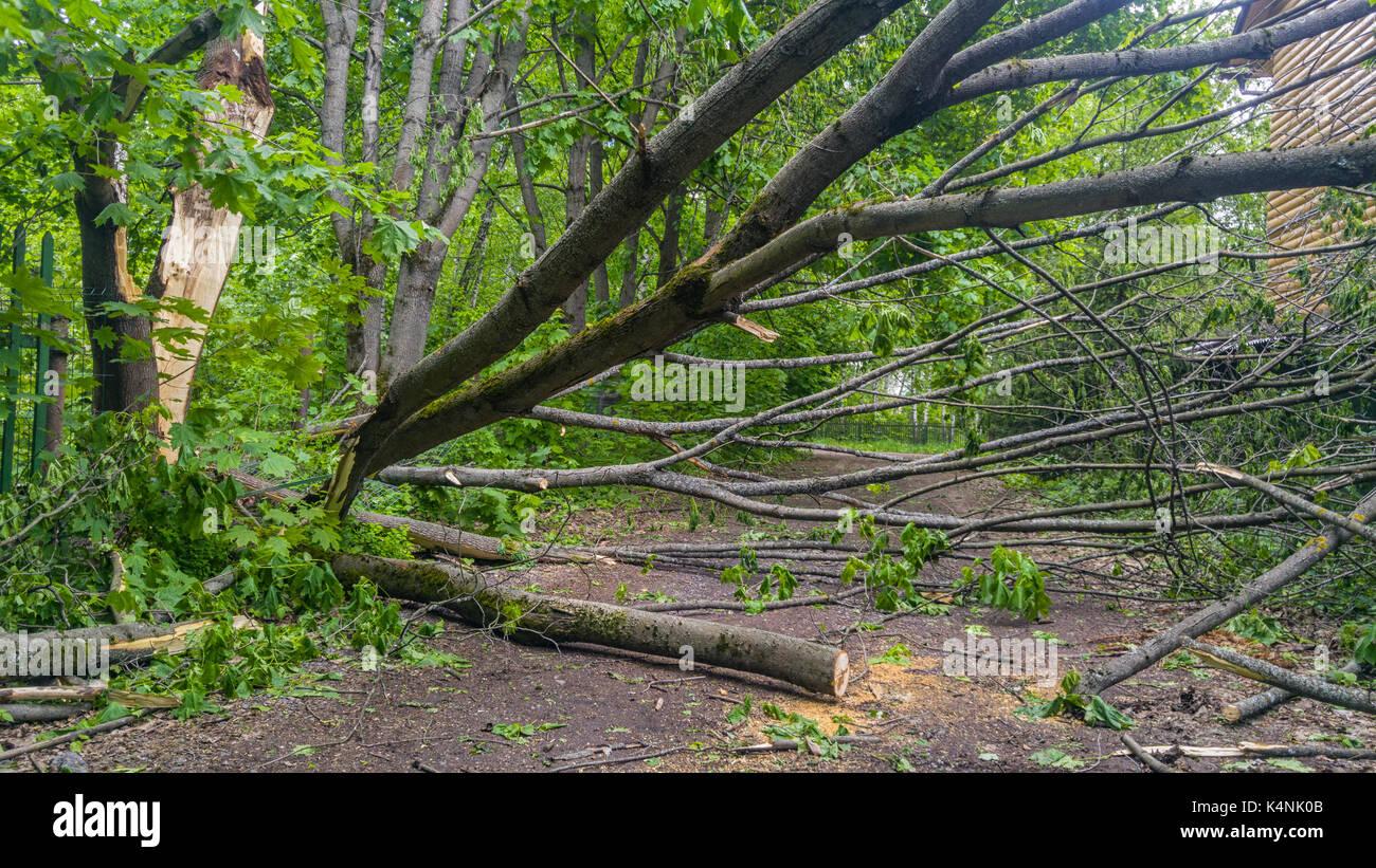 Big Tree auf Land weg fallen nach Sturm Stockbild