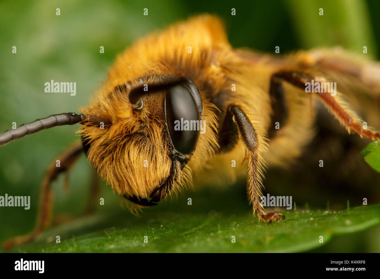 Bergbau Bee Stockbild
