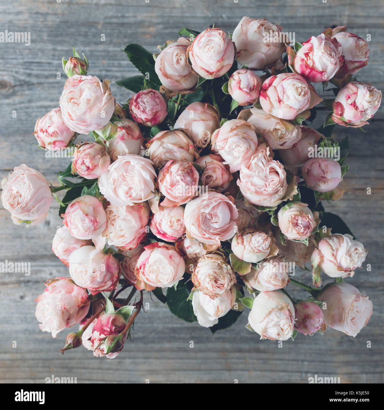 retro background beautiful pink rose stockfotos retro background beautiful pink rose bilder. Black Bedroom Furniture Sets. Home Design Ideas