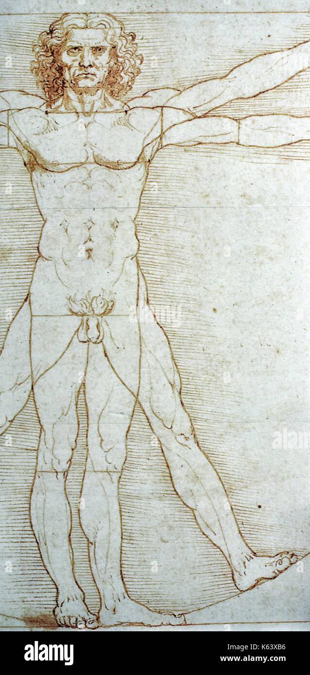 Leonardo da Vincis Zeichnung der menschlichen männlichen Anatomie ...
