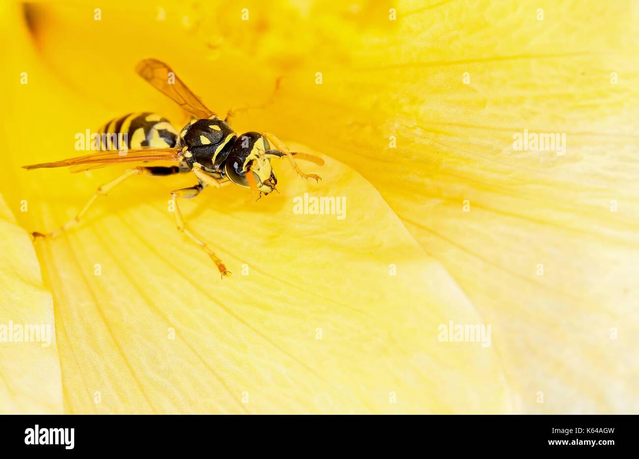 Biene auf einer Blüte Stockbild