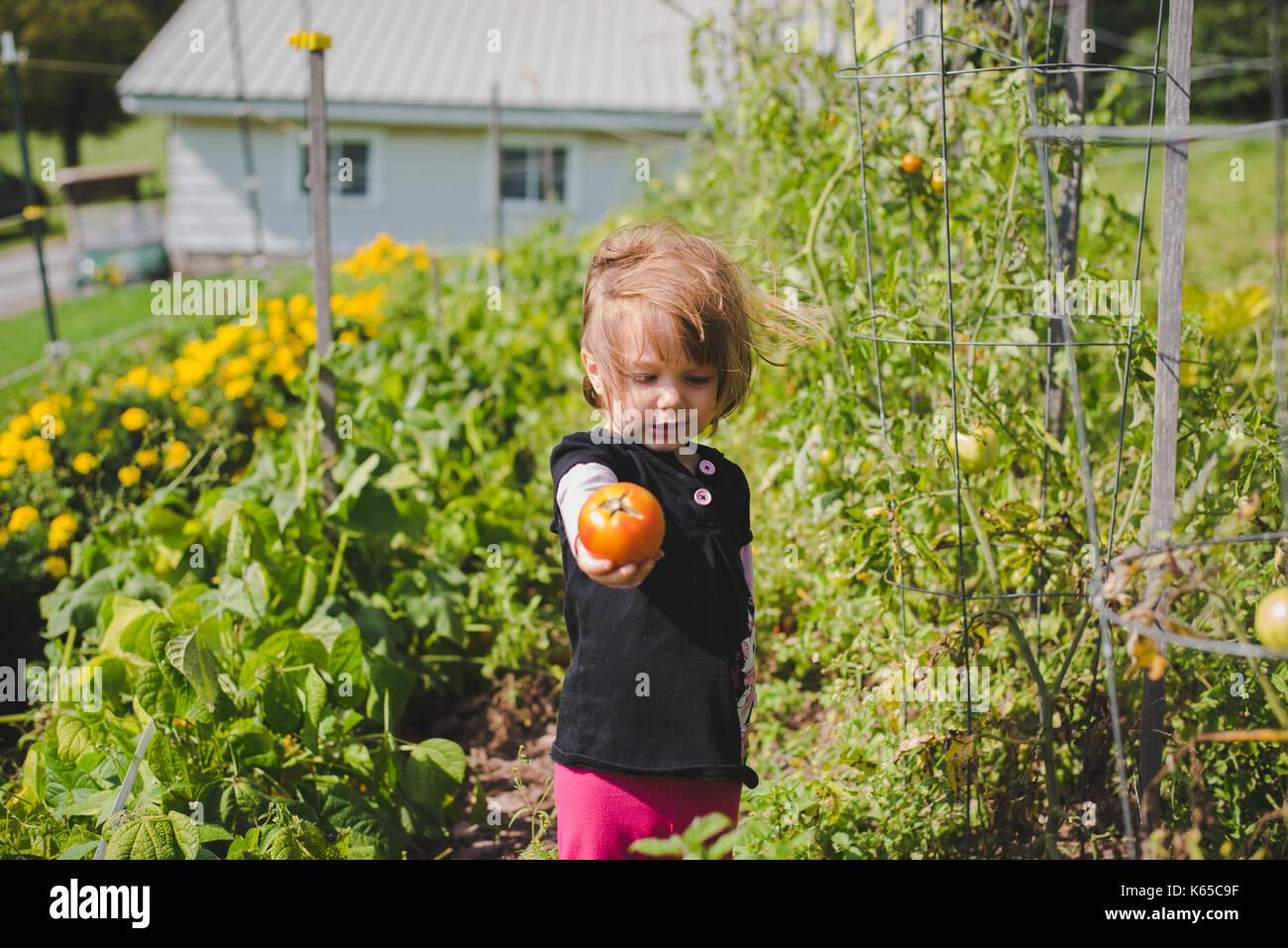 Ein junges Mädchen hält eine Tomate in ihrer Hand nach der Entnahme aus dem gardne. Stockbild