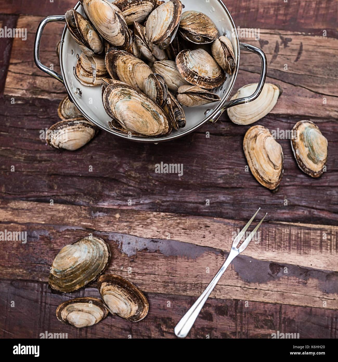 Dampfgarer Muscheln aus New England in einem weiß Collider auf einem rustikalen Tisch bereit sind gereinigt und bereit für das Kochen. Stockbild